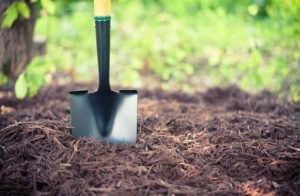 How to Mulch in a permaculture garden?