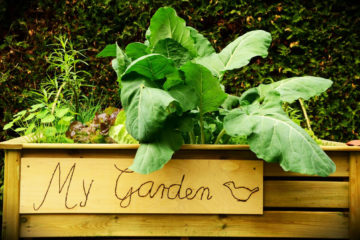 Buy it as a kit or do it yourself? Learn how to build a raised bed