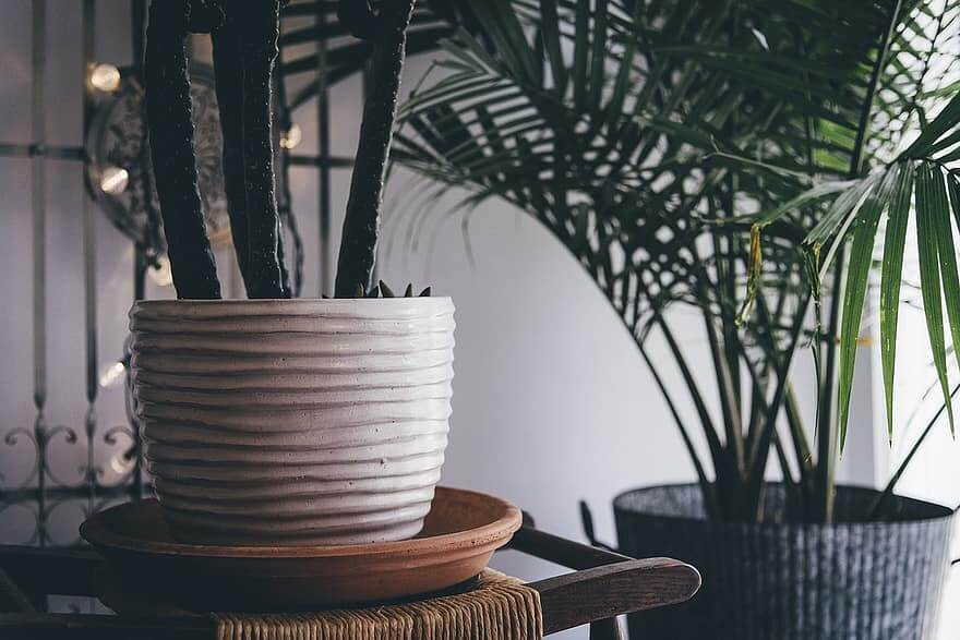 5 tips for successful indoor plants