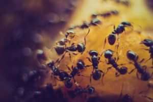 10 tips to keep ants out of the house
