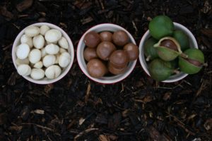Macadamia: queen of nuts with a thousand virtues