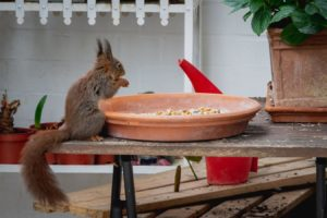 what does a squirrel eat?