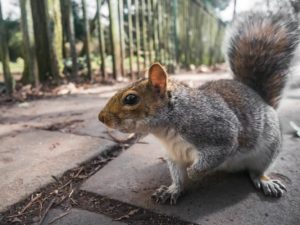 What does a squirrel eat? Can we feed it in winter?